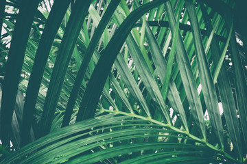 Foto op Plexiglas Palm boom tropical palm leaf, green nature background