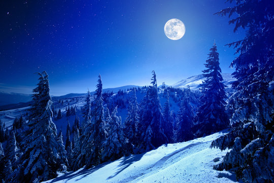 Full moon over winter deep forest covered with snow on winter night