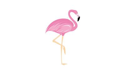 flamingo isolated on white background
