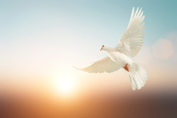 Foto En Lienzo - white Dove fly on pastel vintage background for Freedom concept and Clipping path
