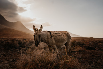 Fotobehang Ezel Wild lebender Esel