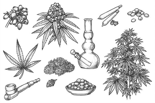 Set of sketches for marijuana items, hemp leaves