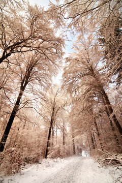 Scenic snow covered forest trail in winter, pleasant color toning