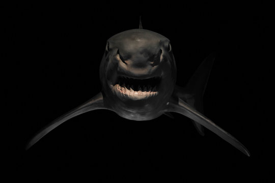 Angry shark with sharp teeth
