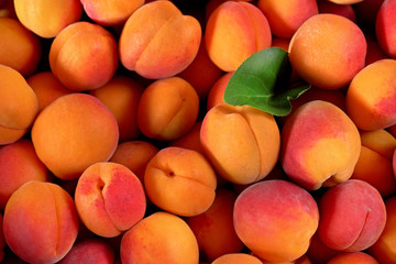 Heap of fresh apricots with one green leaf, closeup detail photo from above