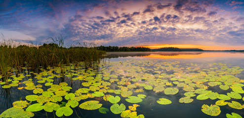 Spoed Fotobehang Waterlelies Panorama of beautiful sunrise over lake