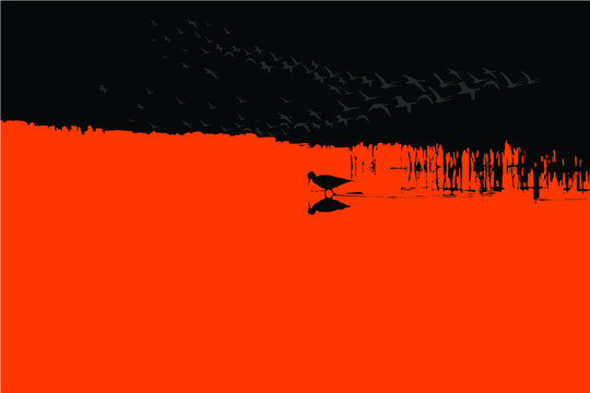 Sunset nature and bird. Vector image. Red black background.