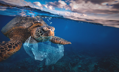 Photo sur cadre textile Tortue Underwater animal a turtle eating plastic bag, Water Environmental Pollution Problem