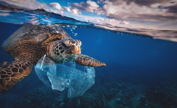 Underwater animal a turtle eating plastic bag, Water Environmental Pollution Problem