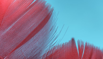 Close up Beautiful red trends bird  feather pattern texture background. Macro photography view. Fototapete