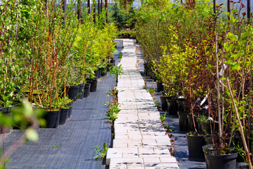 Many of seedlings on sale