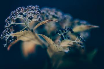Fleur séche