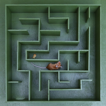 Cute mouse looks for food in maze. Lucky mouse got lost, wanders in labyrinth. Success in solving difficult problems. Hard way on purpose, motivation. Pet. Postcard with mouse. Idea, logic in business