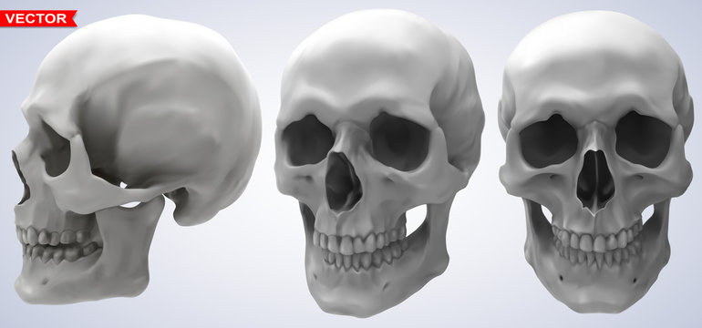 Detailed graphic photorealistic black and white human skulls. On gray background. Vector icon set. Side and front view.