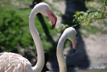In de dag Flamingo 2 Flamingos close up