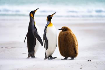 Photo sur Plexiglas Pingouin ペンギン サウンダース島