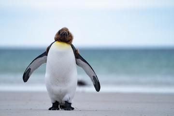 In de dag Pinguin ペンギン サウンダース島
