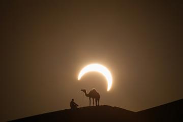 Wall Murals Abu Dhabi Annular solar eclipse in desert with a silhouette of a dromedary camel. Liwa desert, Abu Dhabi, United Arab Emirates.