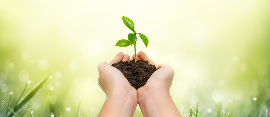 Hands holding young green plant on green nature background.