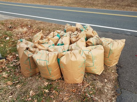 lawn debris and maintenance bags on curb near road