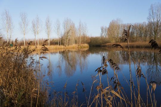 trees along border lake winter