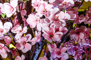 Pink orchid flowers, beautiful orchid pattern, pink background, orchids close up