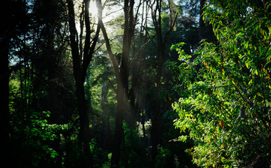 Sun light through the woods, San Carlos de Bariloche, Argentina.