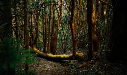 Arayan Forest - Bariloche, Paragonia, Argentina.