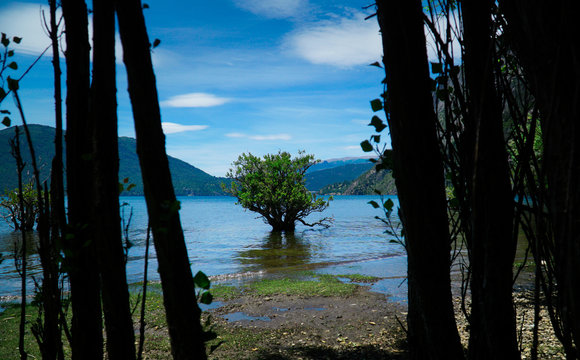 Tree on water - Lacar Lake, Quila Quina, Argentina.