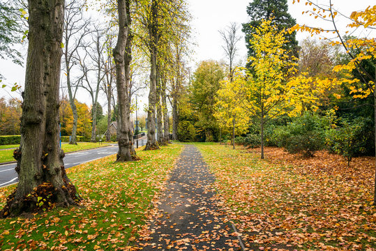 Empty pavement covered in fallen leaves running alongside a tree lined street on a cloudy autumn day