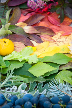 Variety of Autumn Colors Fallen Leaves and berries