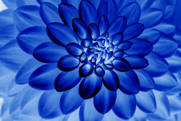 Cadres-photo bureau Dahlia Oil painting of Blue dahlia petals , floral abstract background. Close up of flower dahlia for background