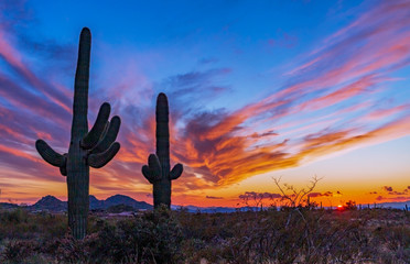 Aluminium Prints Arizona Sunset In The Arizona Desert With Cactus