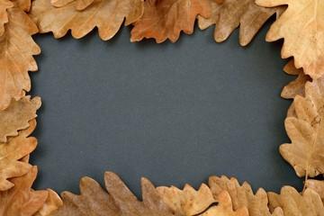 Oak leaves on black background