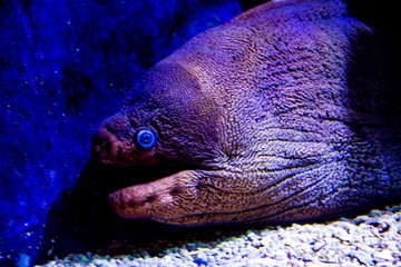 moray eel at the aquarium
