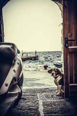 Sad dog sitting at the open door of fishman near stone sea shore and motorbike. Sorrento, Italy
