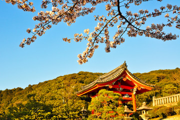 Foto auf Leinwand Kultstatte Cherry blossom and temple Kyoto Japan