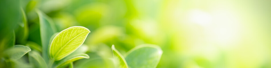 Fototapeten Lime grun Closeup nature view of green leaf on blurred greenery background in garden with copy space for text using as summer background natural green plants landscape, ecology, fresh cover page concept.