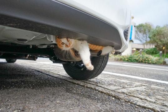 車の底部に入り込んだ野良猫