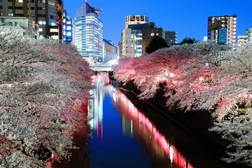 Foto op Canvas Kersenbloesem Cherry blossom, Metropolitan area, Beautiful
