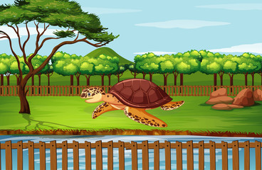 Scene with turtle at the zoo
