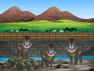 Scene with baboons at the zoo