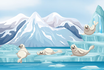 Scene with white seals on ice