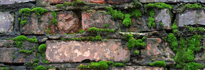A wet brick wall overgrown with moss. Natural,background.