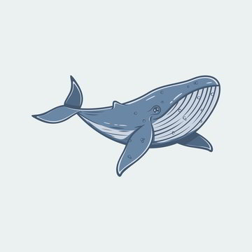 Illustration of a Swimming Humpback Whale.