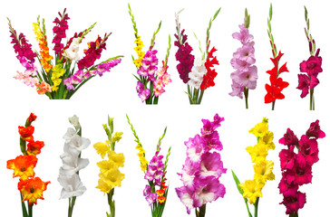 Collection gladiolus flowers isolated on white background. Yellow, red, pink, orange, green. Flat lay, top view