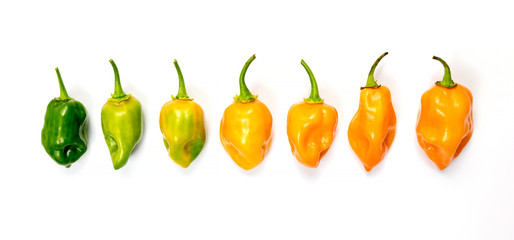 Canvas Prints Hot chili peppers set of habanero chili peppers isolated on white background