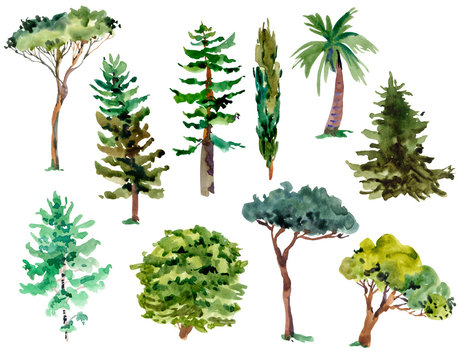 Watercolor natural set of green trees, forest collection isolated on white background