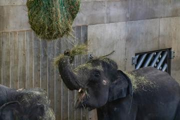 couple of elephants eating at zoo