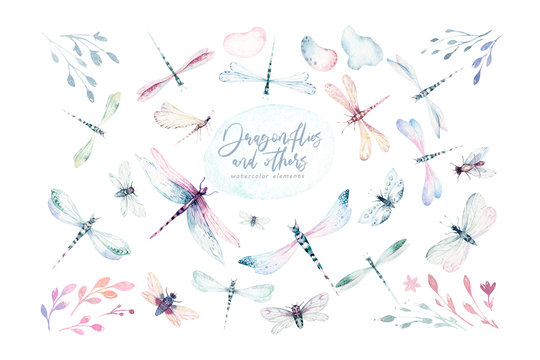 Watercolor fly dragonfly spring wings illustration summer insect collection of bees and wreath dragonflies